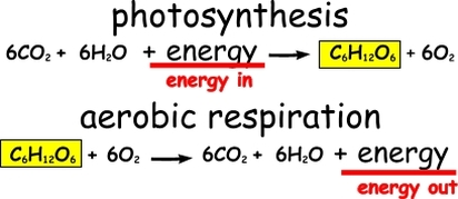 similarities between photosynthesis and cellular respiration